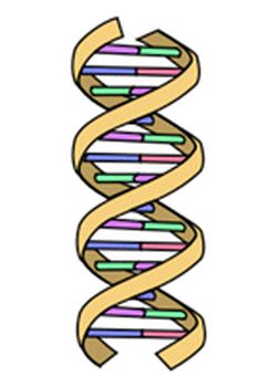 DNA for genealogists
