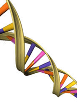 DNA testing and genealogy: the basics