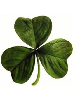Ireland to Australia: Researching your Irish ancestors